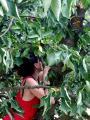 La natura offre ciligie mature buonissime - Ina Maka, nel cuore di Madre Terra, giugno 2017