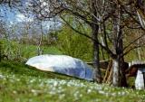 1999 Osho's Dream, Gran Sasso - springtime